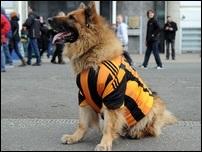 Собака болельщика Халла