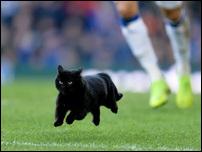 Кошка на матче Эвертона и Вулверхэмптона